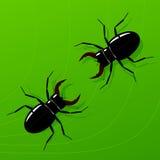 Bug. Stock Photos
