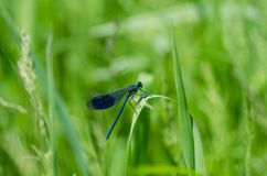 Bug, Damselfly, Detail Stock Photos