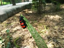Bug in Delhi zoo Royalty Free Stock Photo