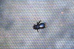 Bug died on metal grate. Big fly died on metal grate Royalty Free Stock Images