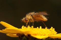 Bug driking nectar Stock Image
