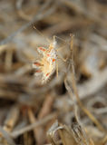 Bug on a dry grass Stock Image