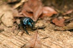 Bug among dry leaves Stock Image