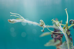 Bug eat a plant leaf, soft and blur Stock Images