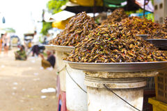 Bug eating of asia Royalty Free Stock Images