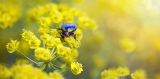 Bug eating flower Royalty Free Stock Images