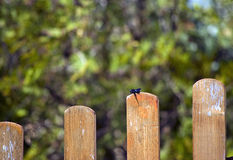 Bug on fence Royalty Free Stock Photo