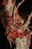 Bug Royalty Free Stock Photos