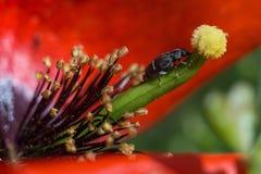 Bug and Flower Stock Photos
