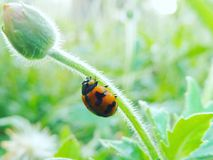 A bug and flower. A bug in a garden stock photo