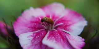 Bug on the flower. Insect, macro, nature royalty free stock photo