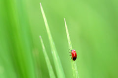 Bug and grass Royalty Free Stock Images
