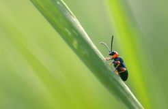Bug in a grass Stock Images