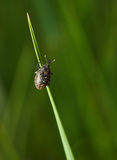 Bug on grass Stock Photography