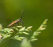 Bug on grass Stock Images