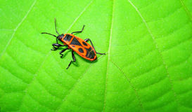 Bug on a Green Leaf Stock Photos