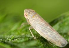Bug on a green leaf. close. In the park in nature Stock Image