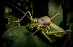 Bug on green leaf Stock Photo