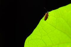 Bug on green Stock Photography