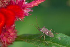 Bug on green leave and red flower Stock Photos