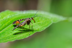 Bug on green leaves. Stock Photo