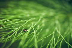 Bug is hiding in the horsetail Stock Photos