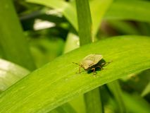 A Bug in his natural habitat royalty free stock photo