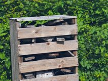 Bug Hotel Stock Photos
