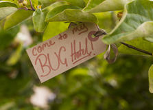 Bug hotel sign. Welcome to my bug hotel sign Stock Photography