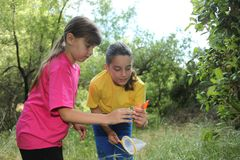 Bug Hunting in the Woods. Sibling Girls Hunting for Insects While Camping Outdoors stock photo