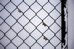 Bug or insect nest on the black chain link fence. stock photo