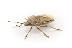 Bug isolated Stock Photo