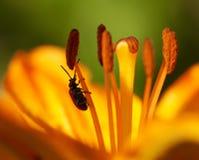 bug kwiat Obraz Royalty Free