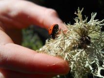 Bug lady. Lady bug red black spots Stock Photo