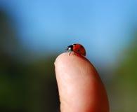 bug ladyen Arkivfoto