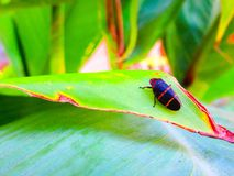 Bug on the leaf royalty free stock images