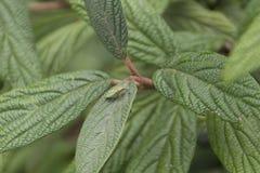 Bug on leaf Stock Images