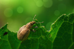 Bug on a leaf. With green colors Stock Photography