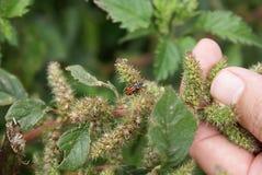 Bug on leaf Stock Photography