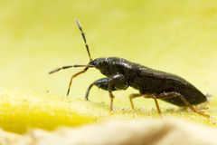 Bug on leaf, macro photo. Stock Photography