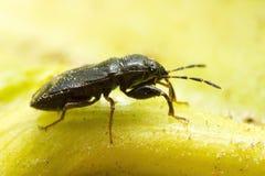 Bug on leaf, macro photo. Stock Images
