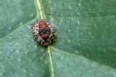 Bug in the leaf Stock Photography