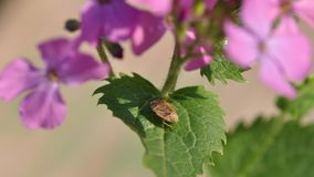 Bug on leaves Stock Photography