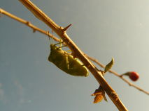 Bug life. This bug sitting on stick royalty free stock photos