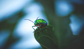 The Bug. Macro of a beautiful bug on the edge of a leaf royalty free stock photo