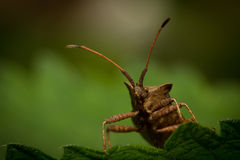 Bug. Macro photo of bug on a leaf stock photo