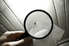 Bug under magnifying glass Stock Image