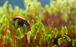 Bug on moss Stock Photos