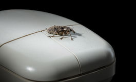 Bug on mouse Royalty Free Stock Images