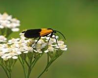 Bug No1 Royalty Free Stock Photo